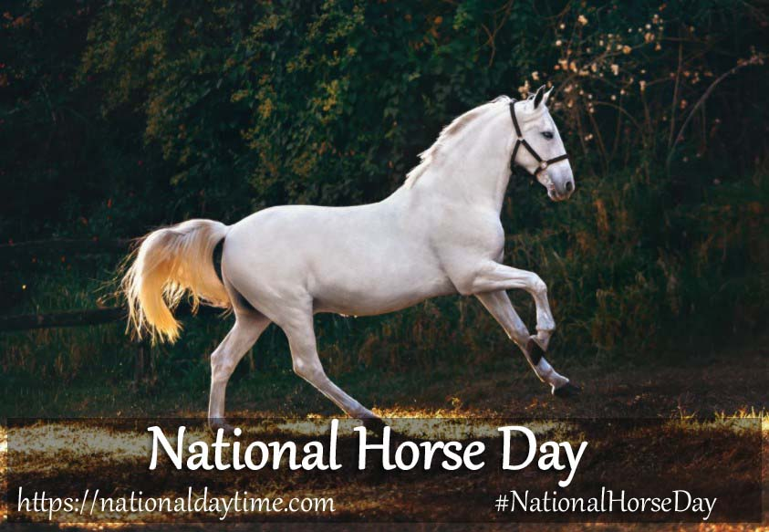 National Horse Day